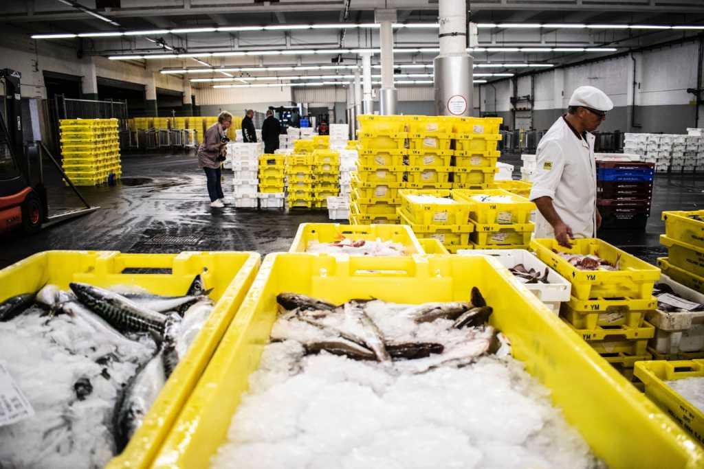 Gestione lotti di produzione per il settore ittico